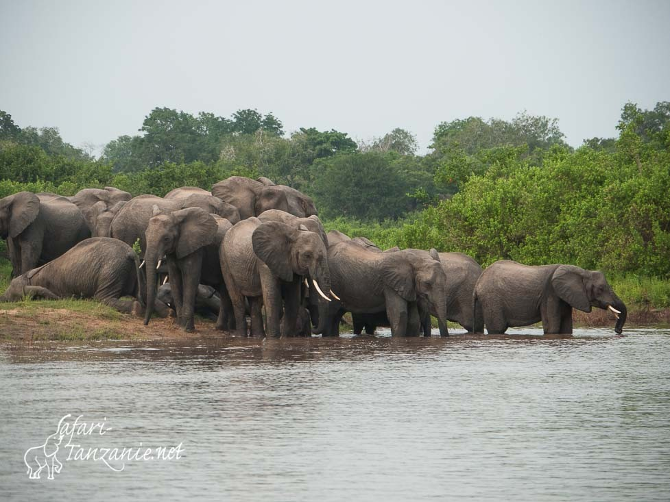 elephants rufiji 1070124