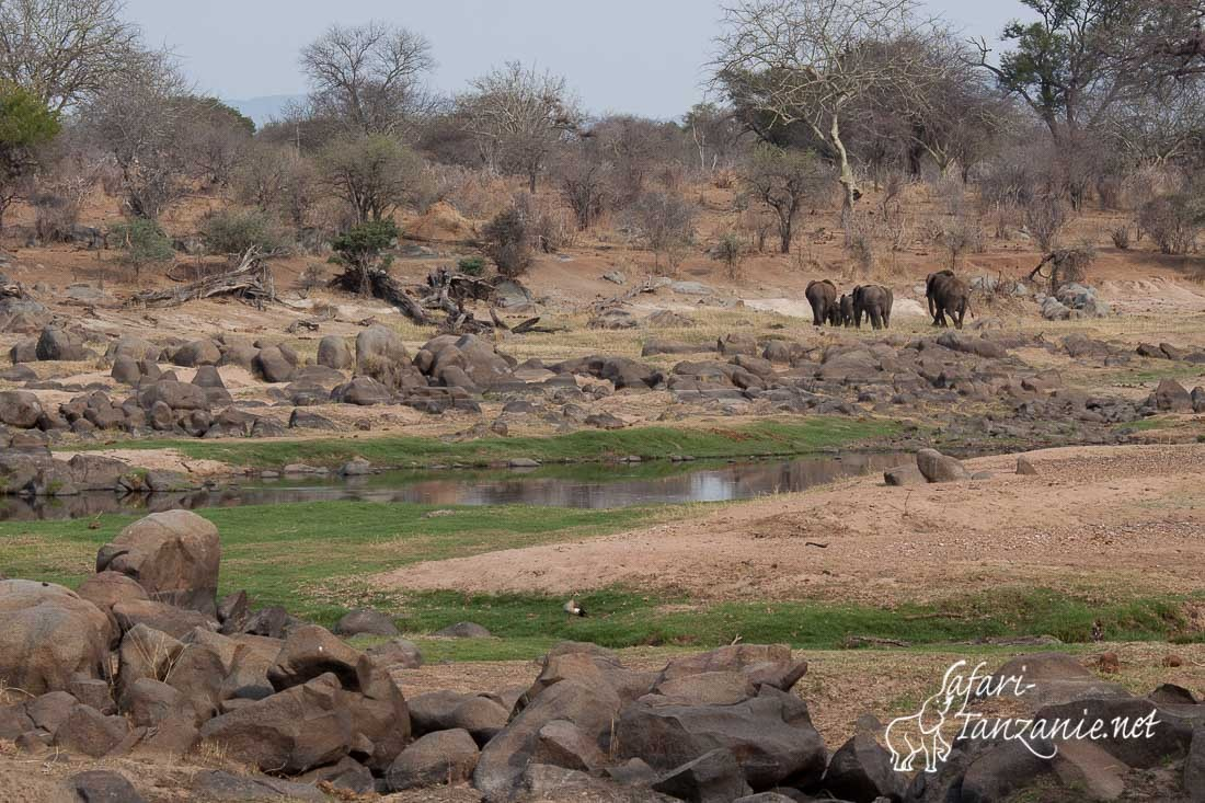 elephants riviere 0733